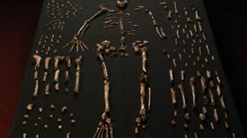 Mysterious New Human Species Emerges from Heap of Fossils