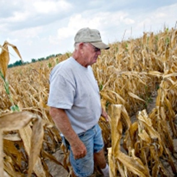 Drought Devastates U.S. Maize and Soya Crops