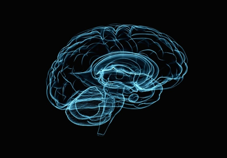 Brain-Mapping Projects to Join Forces