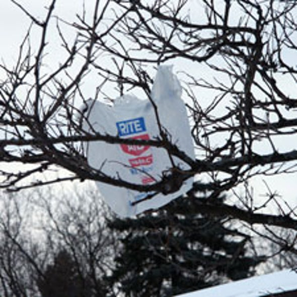 Sacking Plastic: Are Restrictions on Plastic Bags an Effective Way to Slow Landfill Growth and Save Petroleum?