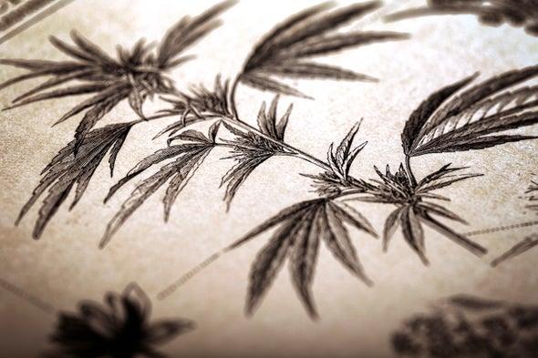 Using Marijuana to Get High Dates Back Millennia