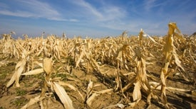 Climate Change Most Affects Nations That Didn't Produce It