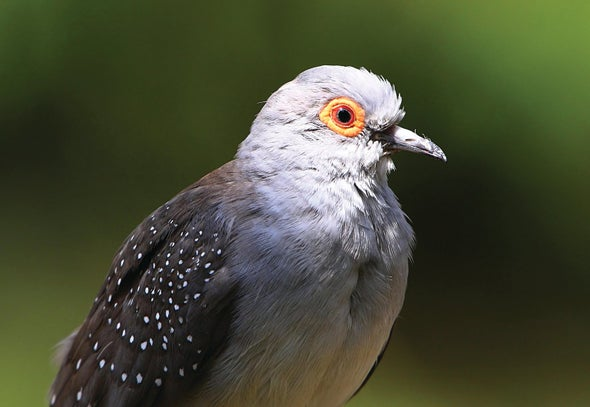 What Birds Can Teach Us about Flying Robots