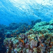 Oceans Could Lose $1 Trillion in Value Due to Acidification
