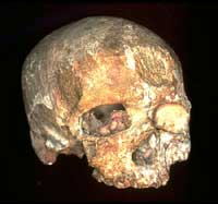 Old Age Was Secret of Modern Humans' Success