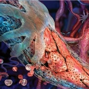 Taming Vessels to Treat Cancer