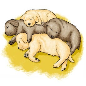 puppy huddle snuggle warm