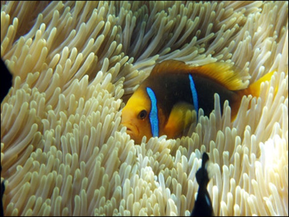 Chatty Clownfish