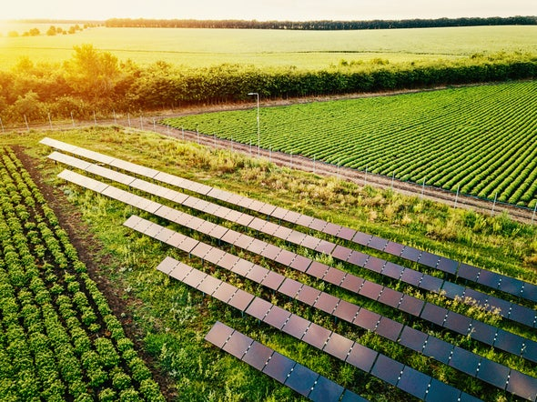Solar Farms Produce Power--and Food