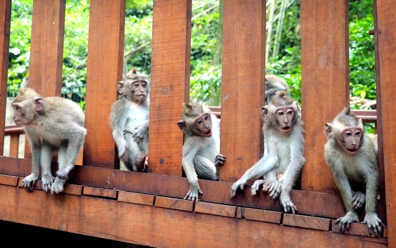 Monkeys Have a Specialized Brain Network for Sizing Up Others' Actions