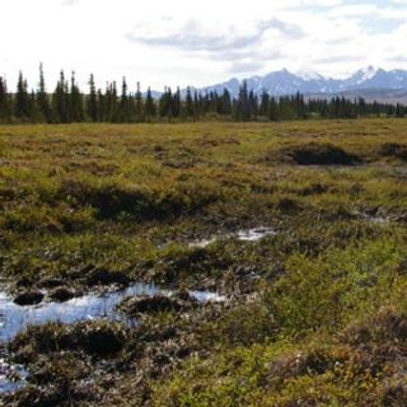 Permafrost Meltdown May Bog Down Global Warming--For Awhile
