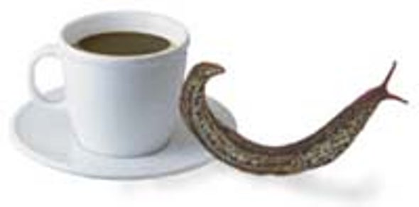 Caffeine Keeps Garden Pests at Bay