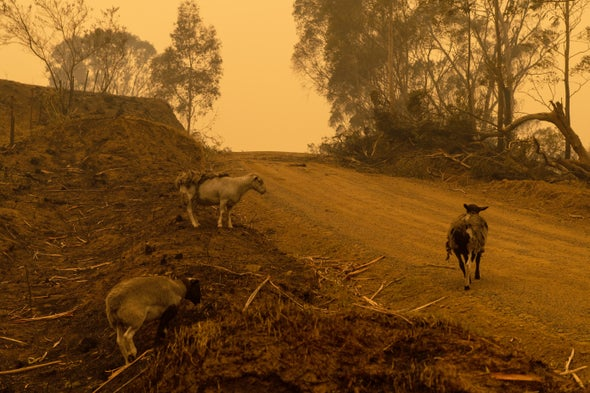 Yes, Climate Change Did Influence Australia's Unprecedented Bushfires
