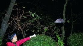"""How China's """"Bat Woman"""" Hunted Down Viruses from SARS to the New Coronavirus"""