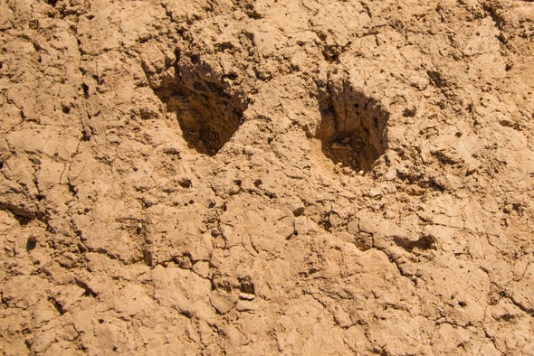 Image result for Hohokam Footprints youtube