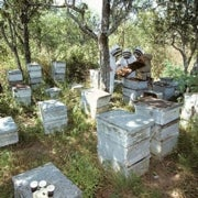 Beeing There: The Search for Pesticides' Effect on Declining Bee Colonies Moves to the Fields