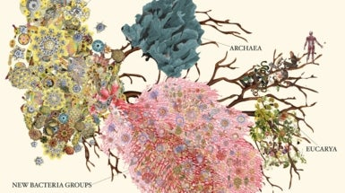 Giant Burst of Tiny Organisms Discovered on Tree of Life