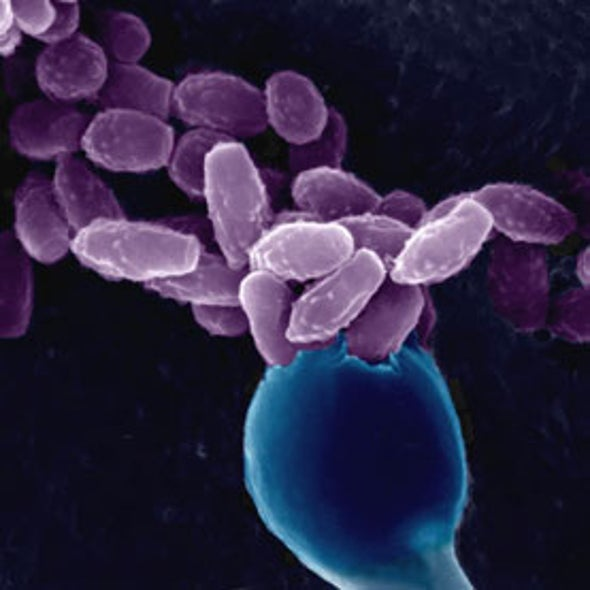 Accident of Evolution Allows Fungi to Thrive in Our Bodies