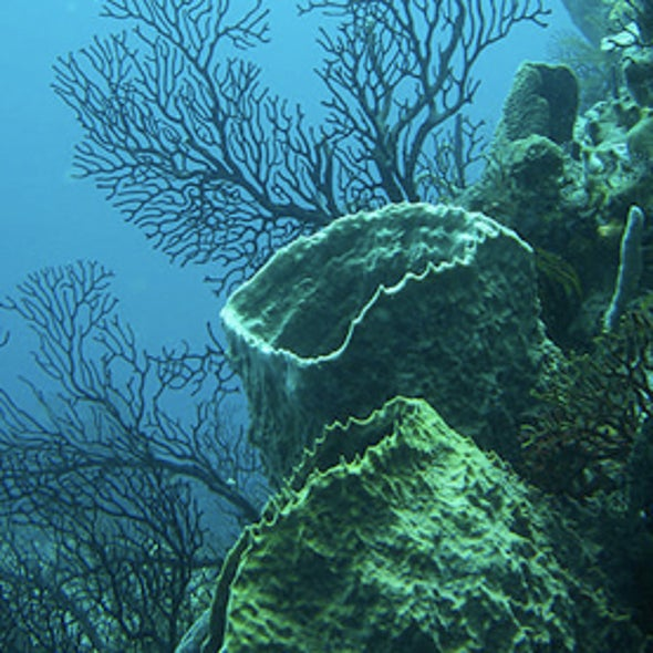 Caribbean Coral Die-off Worries Scientists