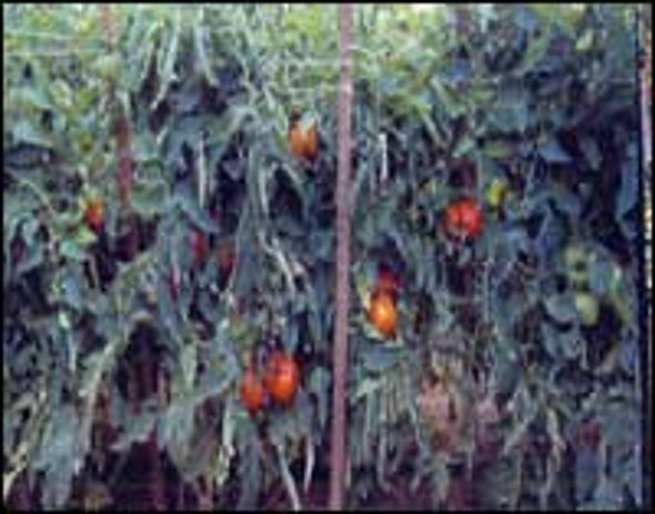 Organic Farming Generates Longer-Lived Plants