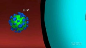 Instant Egghead - Why is HIV So Hard to Kill?