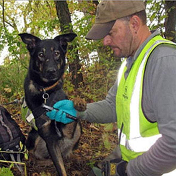Need to Sniff Out Water Pollution? Call in the Dogs