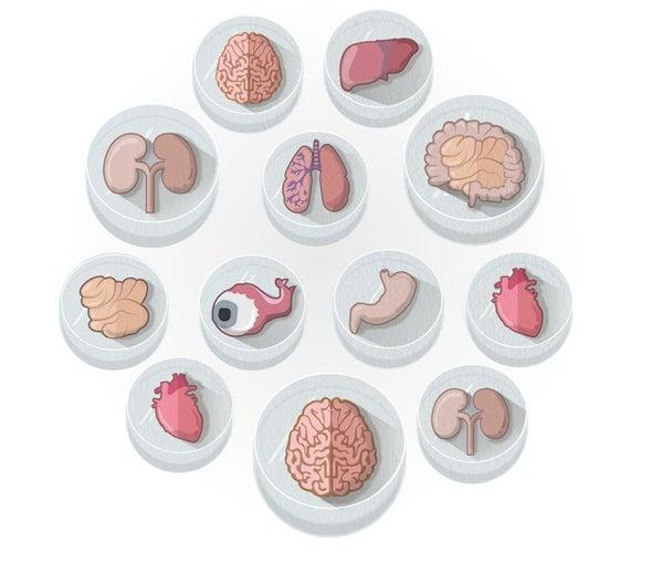 Biotech Interest in Mini Organs Booms