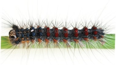 Zombie Insects: A Q&A about a Sinister Virus