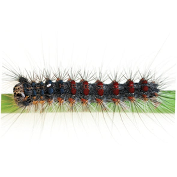 zombie insects a q a about a sinister virus scientific american