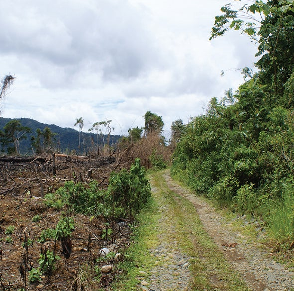 Good News: A Clear-Cut Rain Forest Can Have a Second Life