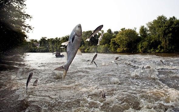 大湖卫士有一个令人震惊的想法,以防止入侵鲤鱼