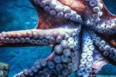 Octopus Skin Inspires Clothes That Double as Displays