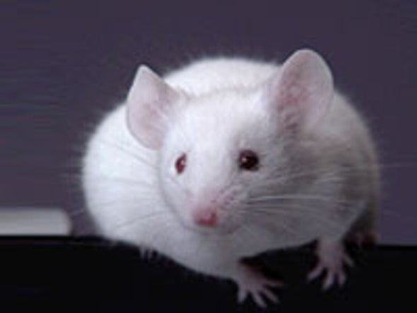 Mouse Genome Sequenced
