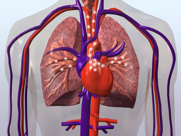 Drugged Gut Microbiome Cuts Heart Risk in Mice