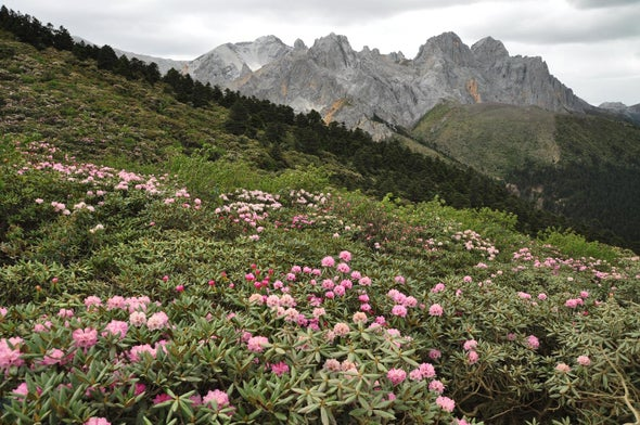 Species Split When Mountains Rise