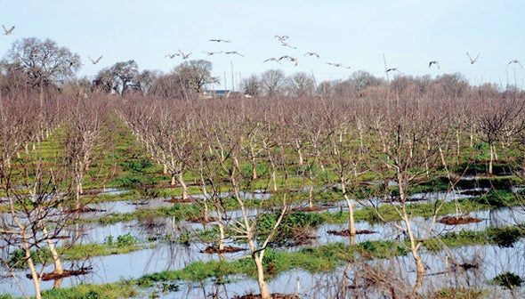 California Farmers Will Intentionally Flood Their Fields This Winter