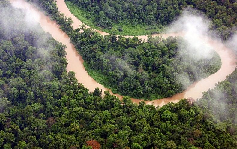 What a Healthy Jungle Sounds Like