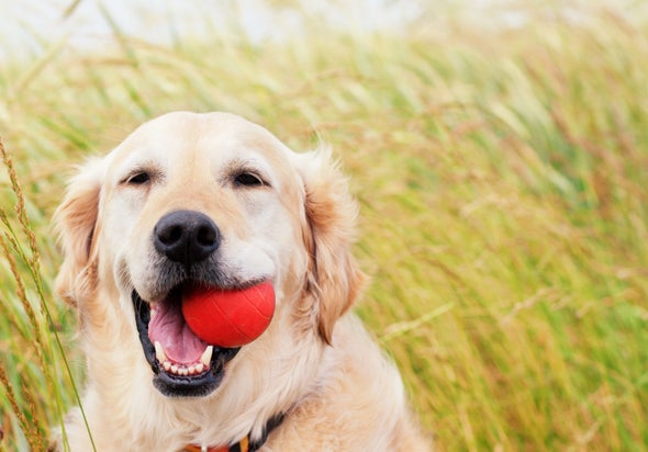 Good News for Dogs with Cancer