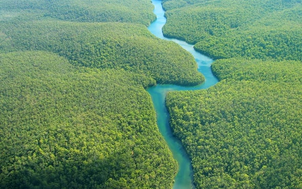 Plants Dominate the Planet's Biomass