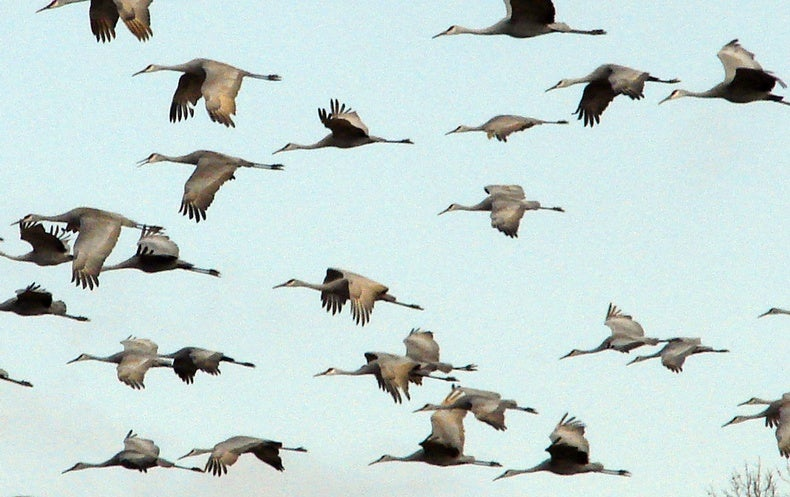 Climate Change Might Make Birds Mis-Time Their Migrations
