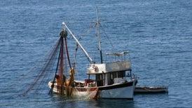Sixth Extinction Proves Slower at Sea
