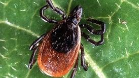 Global Warming May Spread Lyme Disease