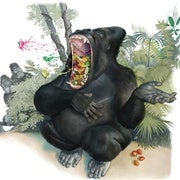 Gorillas Hum and Sing While They Eat to Say,