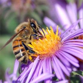 Bee Hunt!