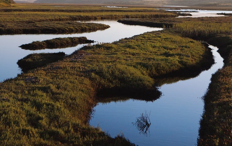 This Battery Runs on the Hidden Power of Estuaries