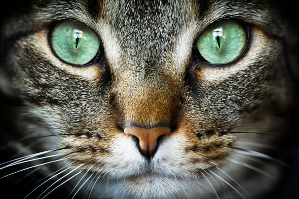 Why do cats purr? - Scientific American