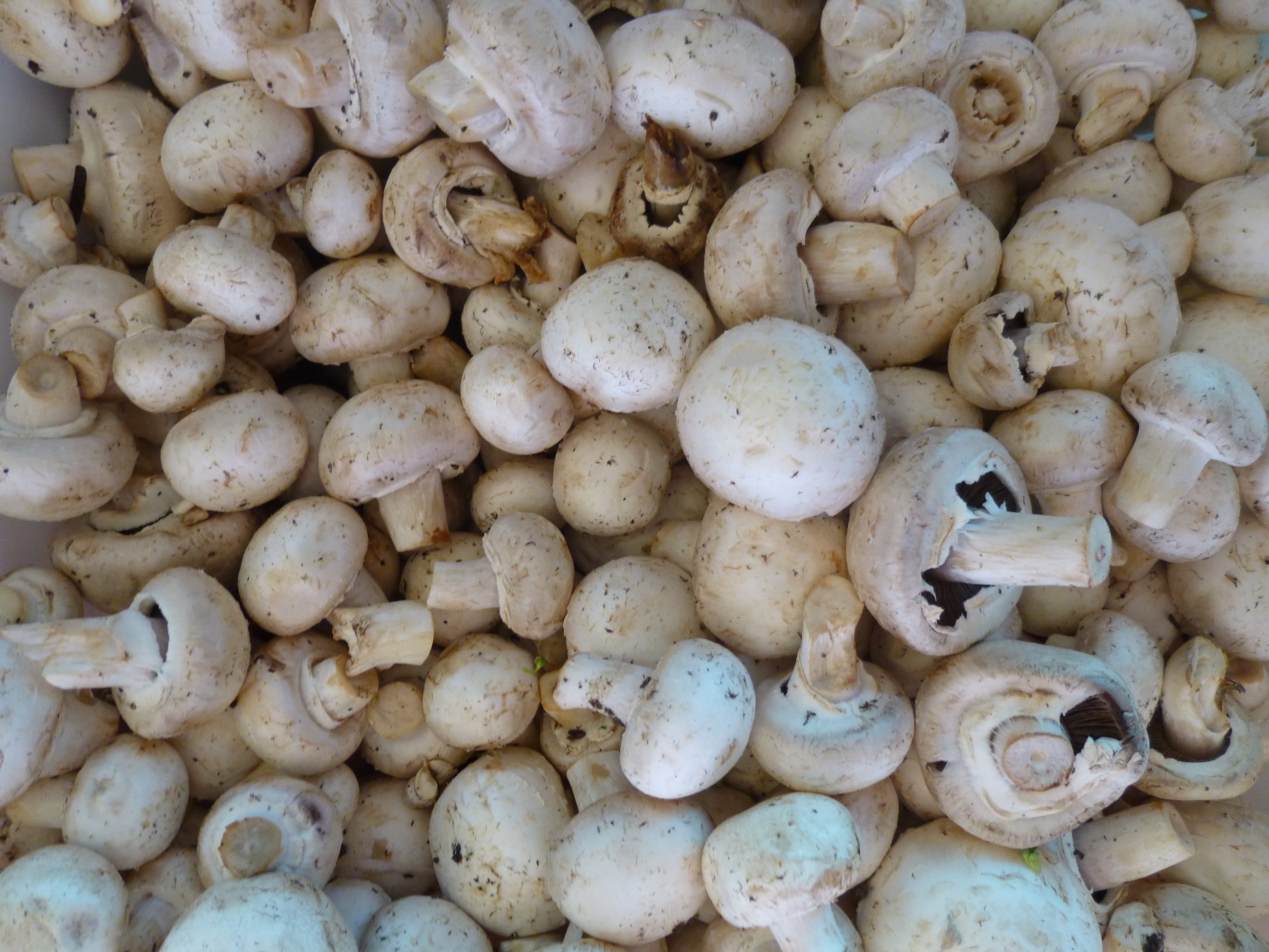 How to store champignons