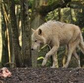 FUNCTION-FIRST WINNER: GRAY WOLF
