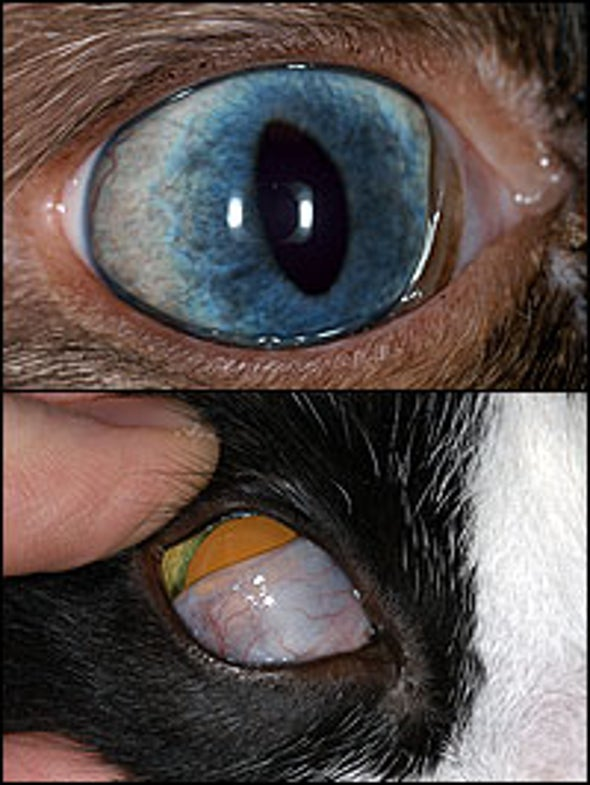 Why do cats have an inner eyelid as well as outer ones?