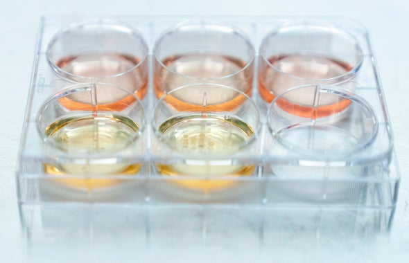 "Lab-Grown ""Mini Brains"" Can Now Mimic the Neural Activity of a Preterm Infant"